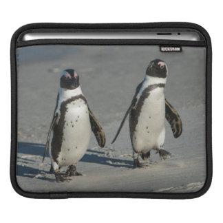 African penguin (Spheniscus demersus)2 Sleeve For iPads