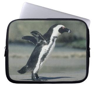 African Penguin, (Spheniscus demersus), coming Laptop Sleeve