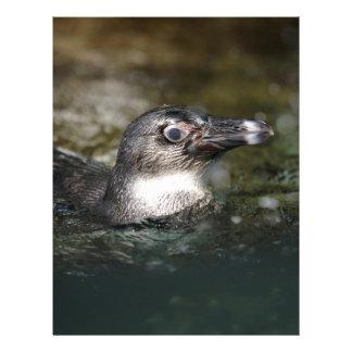 African penguin swimming custom letterhead