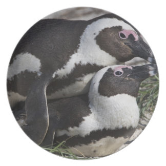 African Penguins, formerly known as Jackass 2 Party Plates