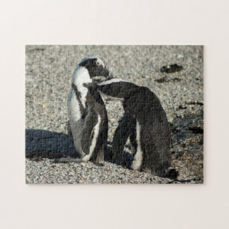 African Penguins grooming each other Jigsaw Puzzle