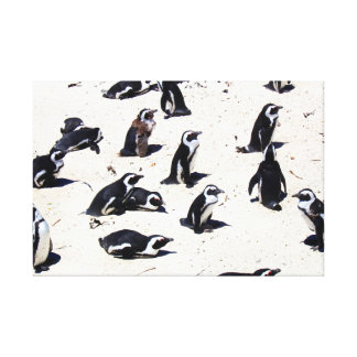 African Penguins on Boulders Beach Stretched Canvas Print