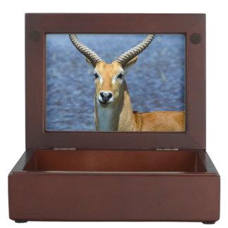 African Puku Antelope Keepsake Box