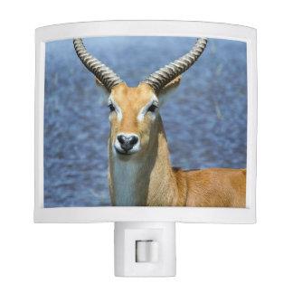 African Puku Antelope Night Lites