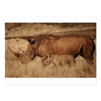 African Rhino mom and baby Postcard
