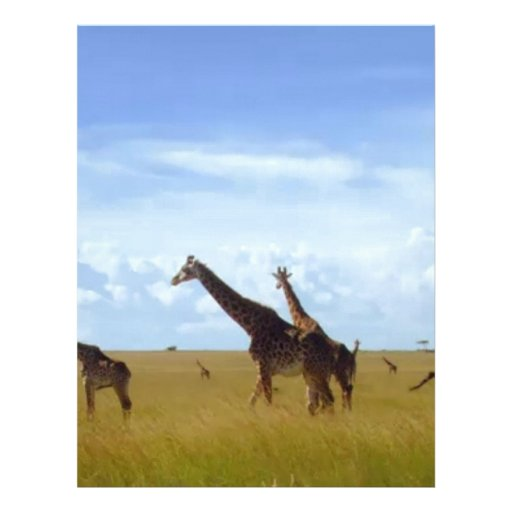 African Safari Giraffes Letterhead Design