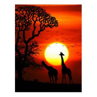 African Safari Sunset Giraffe Silhouettes Postcard