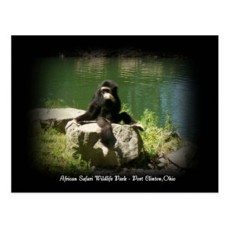 African Safari Wildlife Ohio Postcard