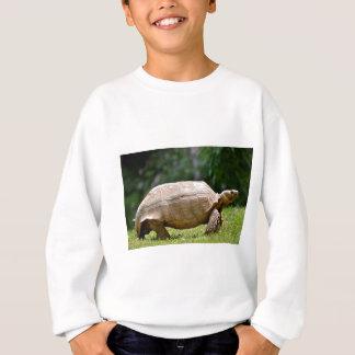African spurred tortoise walking on grass sweatshirt