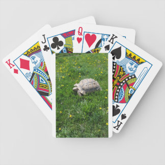 African sulcata tortoise bicycle playing cards