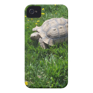 African sulcata tortoise Case-Mate iPhone 4 case