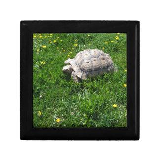 African sulcata tortoise gift box