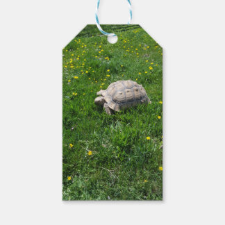 African sulcata tortoise gift tags