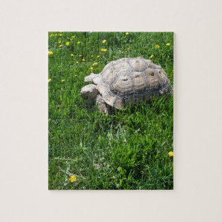 African sulcata tortoise jigsaw puzzle