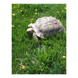 African sulcata tortoise letterhead