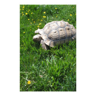 African sulcata tortoise stationery