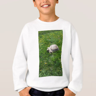 African sulcata tortoise sweatshirt