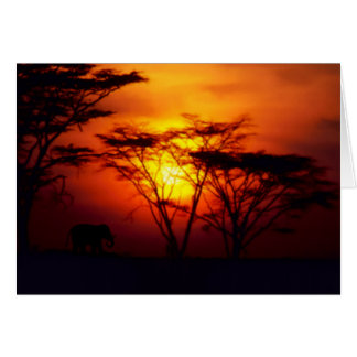 African Sunset Card