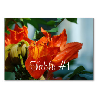 African Tulip Tree Table Cards