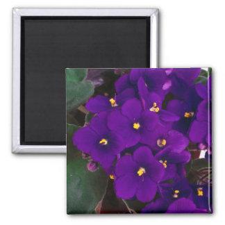 african violet square magnet