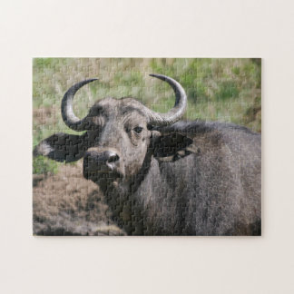 African Water Buffalo Jigsaw Puzzle