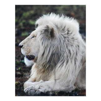 African White Lion Profile photo Letterhead