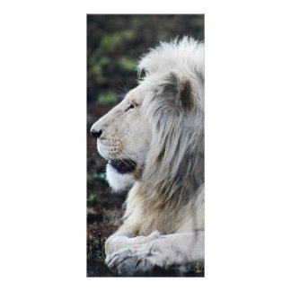 African White Lion Profile photo Rack Card