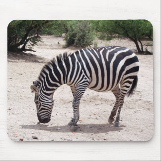 African zebra at the zoo mouse pad