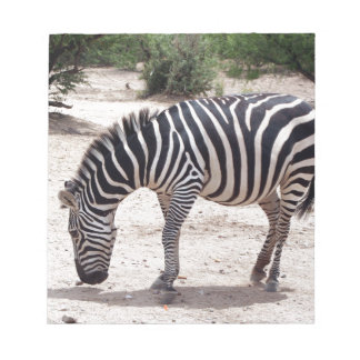 African zebra at the zoo notepad
