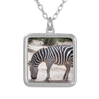 African zebra at the zoo silver plated necklace