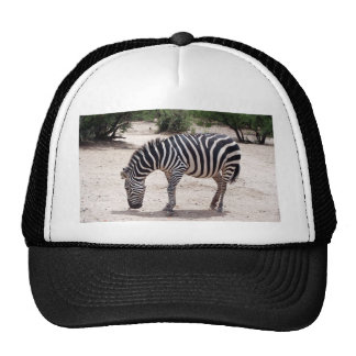African zebra at the zoo trucker hat