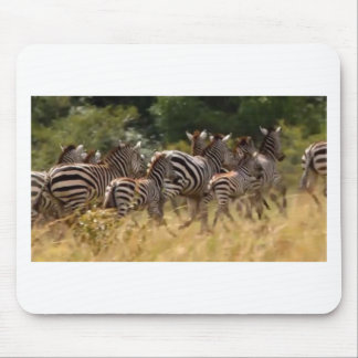 African Zebra cool stuff Mouse Pads
