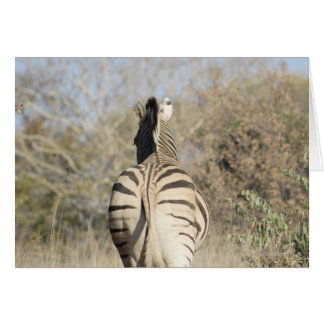 African zebra note card