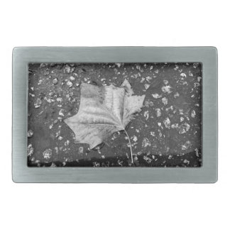 After the Rain Storm Belt Buckles
