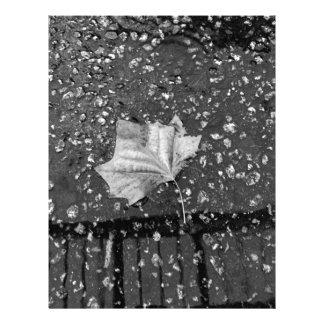 After the Rain Storm Letterhead