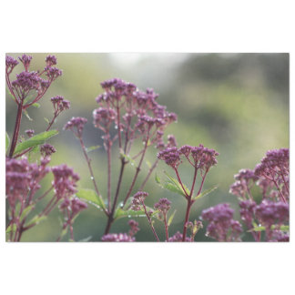 After the Rains Little Joe Pye Weed Tissue Paper