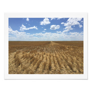 After the Wheat Harvest Photograph