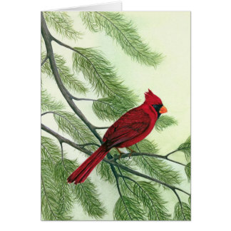 Afternoon Cardinal - Note Card