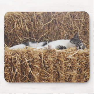 Afternoon Cat Nap Mouse Pad