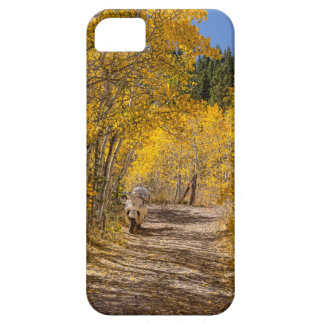 Afternoon Drive iPhone 5 Cover