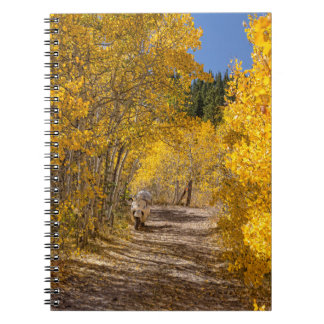 Afternoon Drive Spiral Notebook
