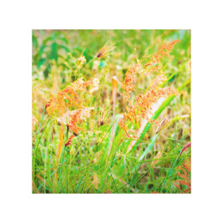 Afternoon Floral Scene Photo Canvas Print