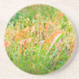 Afternoon Floral Scene Photo Coaster