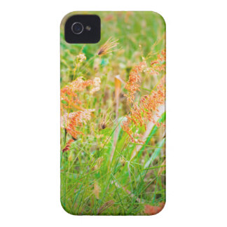 Afternoon Floral Scene Photo iPhone 4 Case-Mate Case