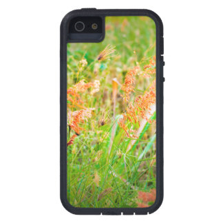 Afternoon Floral Scene Photo iPhone 5 Cover