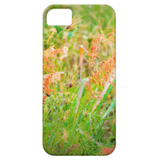 Afternoon Floral Scene Photo iPhone 5 Covers
