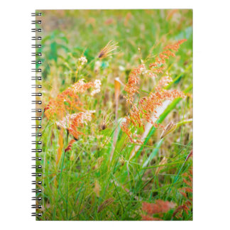 Afternoon Floral Scene Photo Notebook
