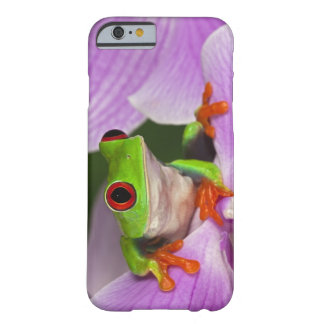Agalychnis callidryas. barely there iPhone 6 case