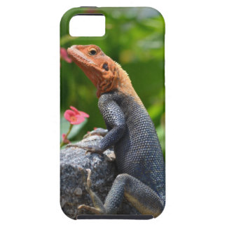 Agama - The Rainbow Lizard iPhone 5 Cover