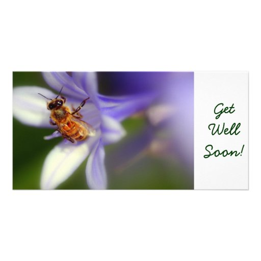 agapanthus africanus, GetWellSoon! Photo Card Template